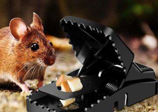 Cách bẫy chuột hiệu quả nhất